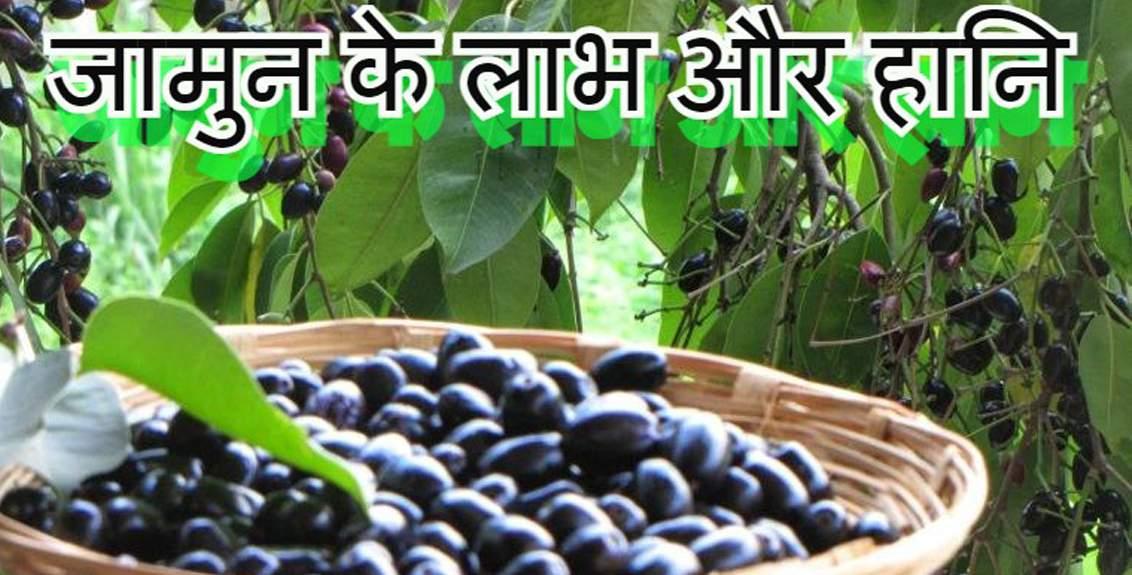 जामुन खाने के फायदे और नुकसान Jamun Khane ke Fayde aur Nuksan in Hindi